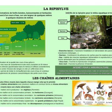 Panneau-1-sur-les-ripisylves-et-les-chaines-alimentaires