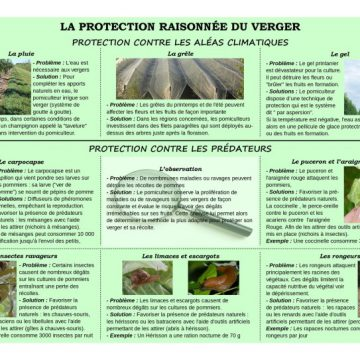 Panneau-12-sur-la-protection-raisonnée-du-verger-1