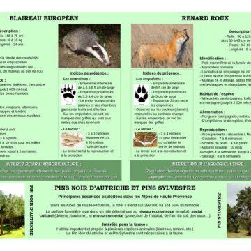 Panneau-4-sur-les-blaireaux-et-les-renards-et-les-pins