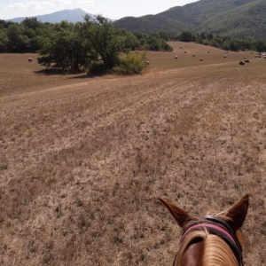 ecuries équitation proche sisteron clamensane