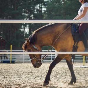 stages et cours équestres équitopassion 04 la motte du caire activités loisirs
