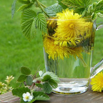 plantes comestibles sauvages